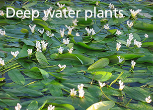 Deep water plants