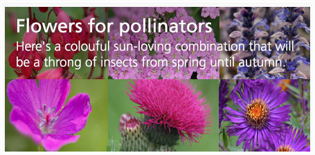 Flowers for pollinators