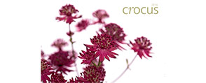 Crocus catalogue