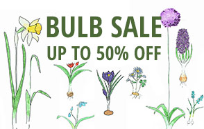 Bulb sale up to 50% off