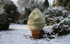 Protect plants from the cold