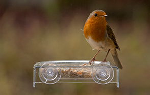 Encourage wild birds into your garden with food & shelter