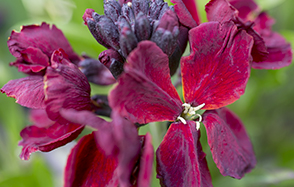 Wallflowers for autumn colour