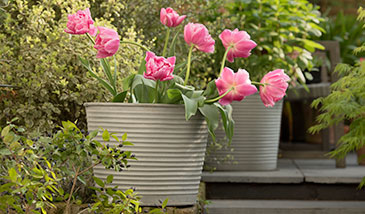 Pots for bulbs