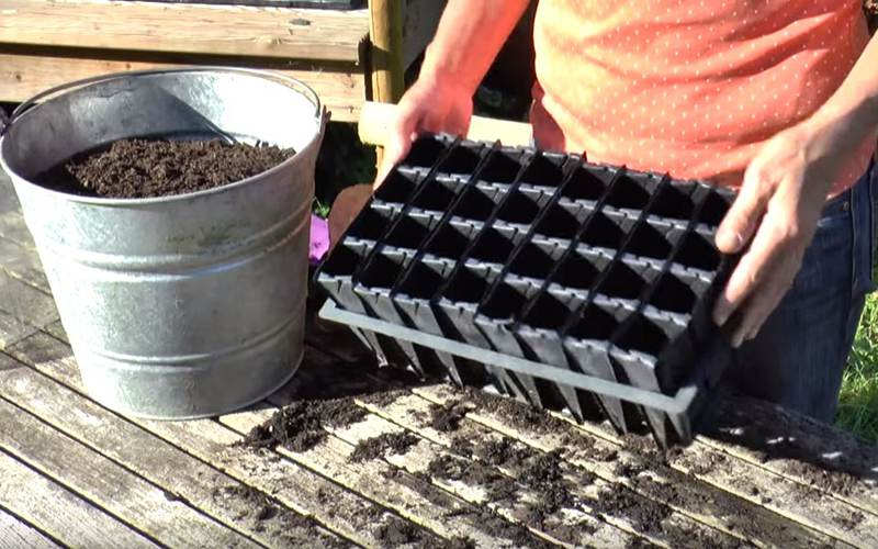 How To: Sow & overwinter broad beans