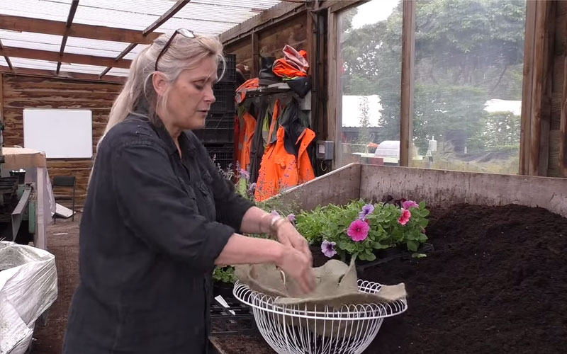 How to plant up a hanging basket