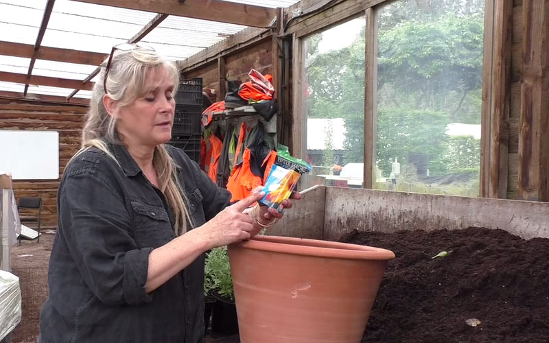How to plant up a patio pot with herbaceous plants
