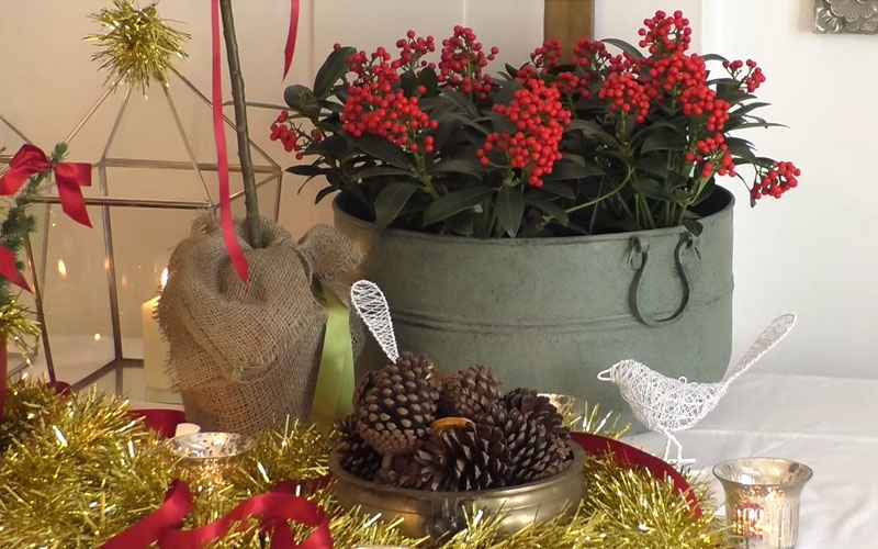 Creating a Christmas planter
