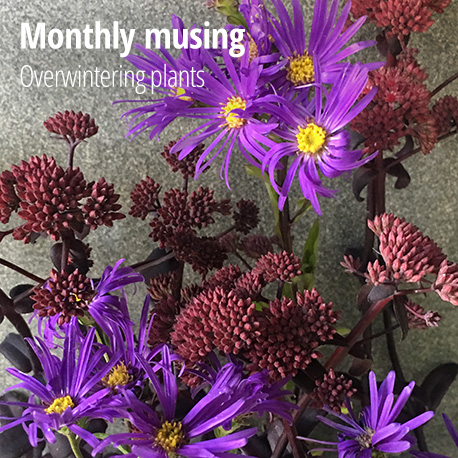 Monthly musings