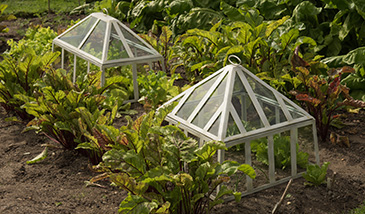 Wire cloches