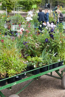 How to buy plants on our open day