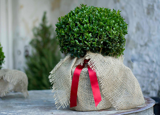 Outdoor plant gifts