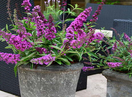 Fill your garden with fragrance. Creating a scented patio