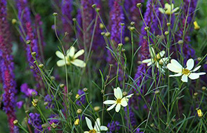 10 plants for late summer colour