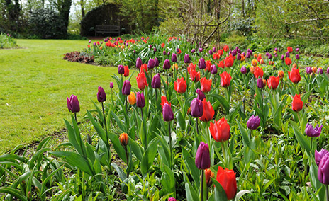 Bulbs in beds & borders
