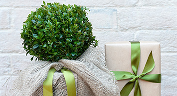 Plants for gifts