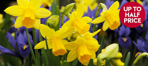 Last chance to plant bulbs