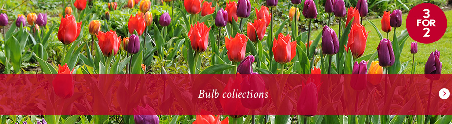 Bulb collections