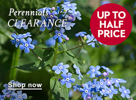Perennials offer