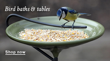 Bird baths & tables
