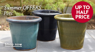 Summer OFFERS Pots