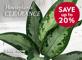 House plants clearance