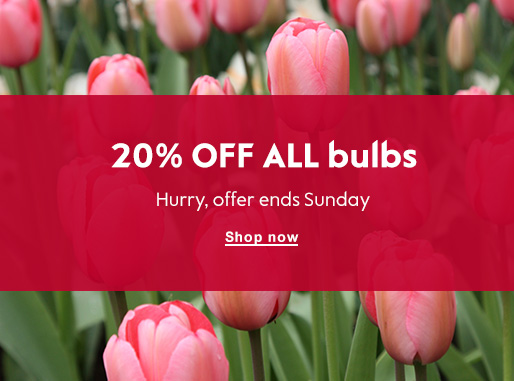 20% OFF ALL bulbs