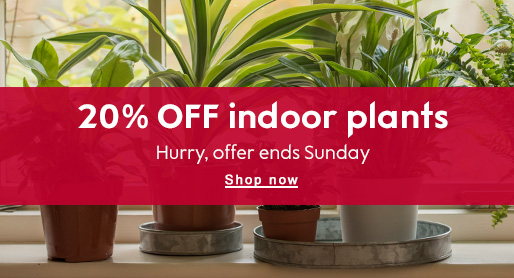 20% OFF indoor plants