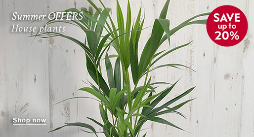 Summer OFFERS House plants