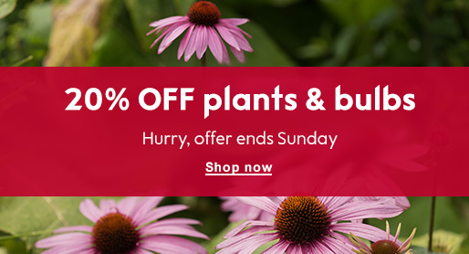 20% OFF plants & bulbs