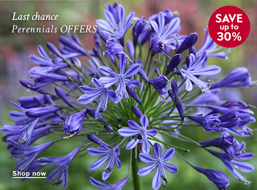 Last chance Perennials OFFERS