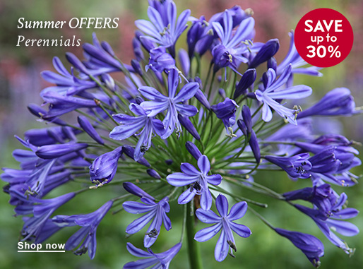 Summer OFFERS Perennials