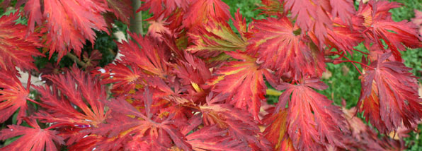 Autumn Colour