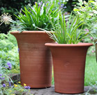 Agapanthus and flared pot combination
