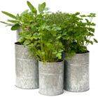 Herbs and galvanised planter combination