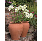 Hydrangea and tulip pot combination