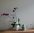 Phalaenopsis Rio Grande and orchid pot cover combination
