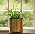 Spathiphyllum and brass coated hand etched planter