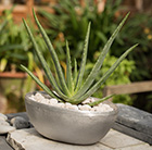 Aloe vera rough cast aluminium oval bowl