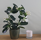 Stephanotis and pot cover combination