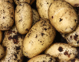 Click to view product details and reviews for Potato Aposcharlotteapos Potato Second Early Scottish Basic Seed Potato.