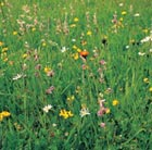 Wildflowers for a shady meadow