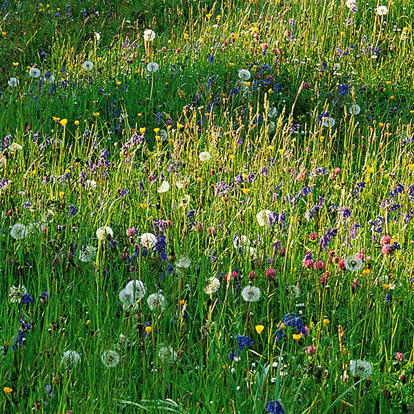 wildflower plug plant collection