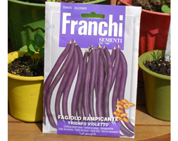 Click to view product details and reviews for Bean Climbing French Apostrionfo Violettoapos Climbing French Bean Phaseolus Vulgaris Apostrionfo Violettoapos.