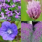 Edible Flowers Plant Combination