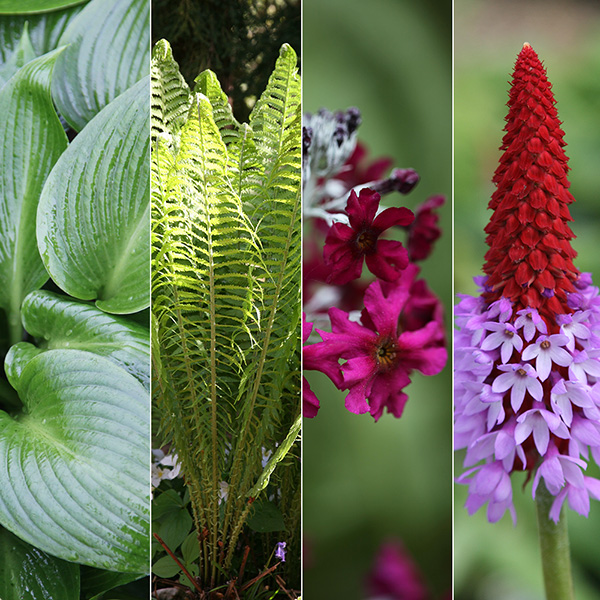plant combinations, Beautiful flower