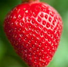 strawberry Fenella (PBR)