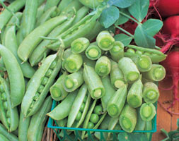 Click to view product details and reviews for Pea Apossugar Snapapos Pea Sugarsnap Pisum Sativum Apossugar Snapapos.