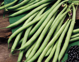 Click to view product details and reviews for Bean Climbing French Aposcobraapos Climbing French Bean Phaseolus Vulgaris Aposcobraapos Pbr.