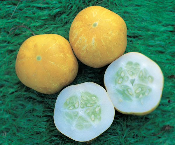 cucumber / Cucumis sativus 'Crystal Lemon'